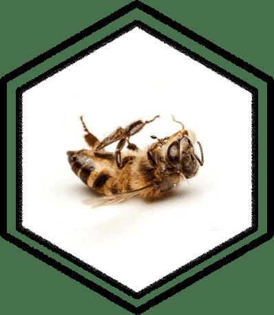 honingbij signaal functie