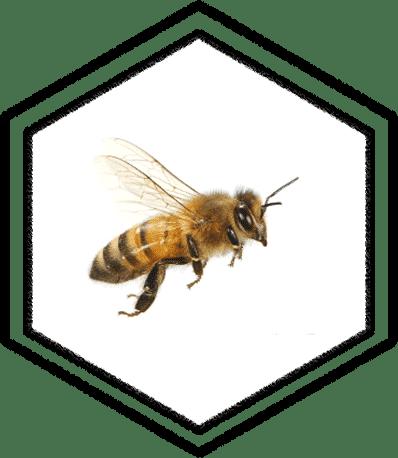 honingbij symbool functie