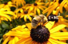 honingbij hoofdrekenen