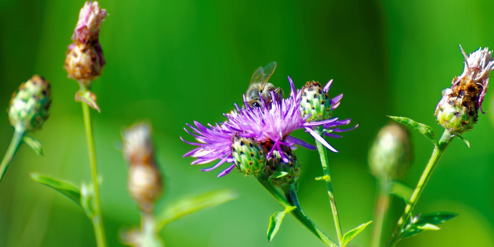biodiversiteit-cursus