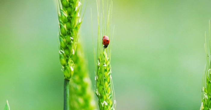 biodiversieit en gewasopbrengst