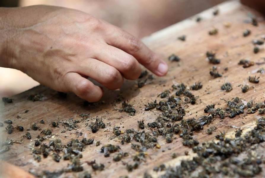 bureaucratische moord op de bijen