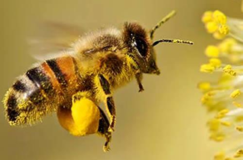 Feitjes over de bijtjes
